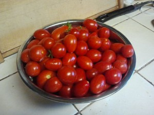 The first round of tomatoes, picked about a month ago.