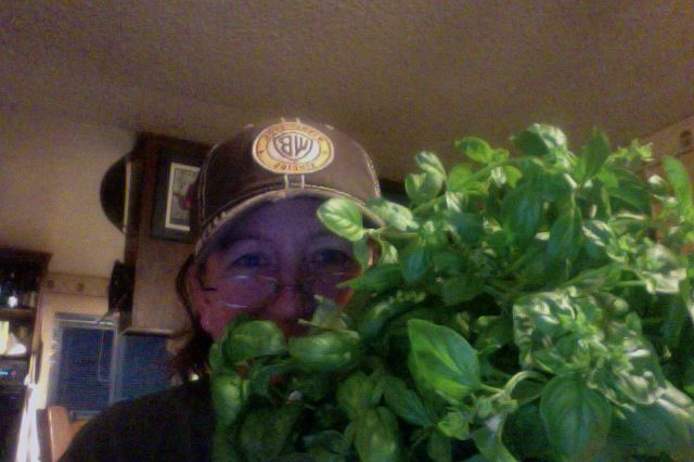 Basil for pesto, 10-18-14